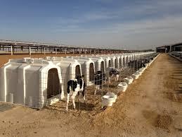 Plastic Calf Hutches Plastics News