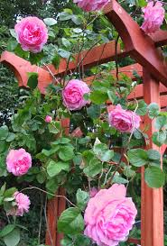 Reaganfordinterior 100 Dave S Garden Roses 122 Best Our Garden Images On