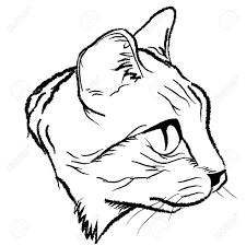 cat face drawing design by illustration royalty free cliparts