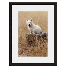 90 best westie images on highlands terriers and