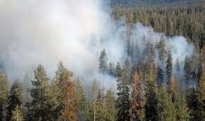 Wildfire Brookings by Let It Burn The Forest Service Wants To Stop Putting Out Some