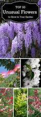 Fragrant Plants 954 Best Gardening Images On Pinterest Container Garden Flower
