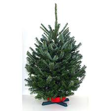 fraser fir christmas tree shop 3 5 ft fresh fraser fir christmas tree at lowes