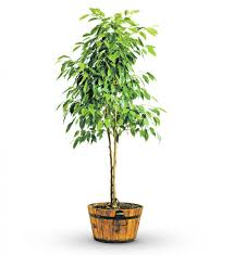 best 28 potted tree small potted tree 3d model cgtrader