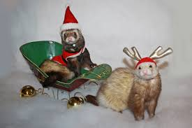 nothing says happy holidays like a ferret in a santa hat wsj
