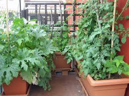 being an urban gardener creating a city vegetable garden