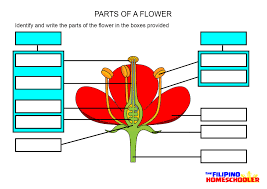 structure of a flower worksheet worksheets
