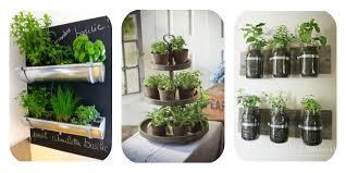 plante pour cuisine comment décorer intérieur avec des plantes trucs de nana