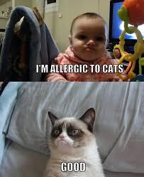 Funny Grumpy Cat Meme - top 25 grumpy cat memes cattime