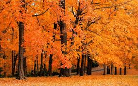 cute baby boy autumn leaves wallpapers free fall desktop backgrounds www color pinterest