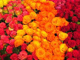 photo blog the melbourne international flower and garden show