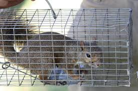 are rats in my home causing an allergic reaction angie u0027s list