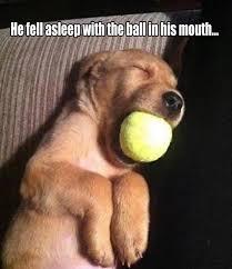 Animals Memes - 20 funny animals memes funny animal animal and dog