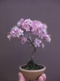 best 25 mini bonsai ideas on indoor bonsai tree