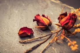 dried roses petal crafts lovetoknow