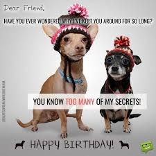 Birthday Dog Meme - happy friend birthday meme and pictures with wishes pk