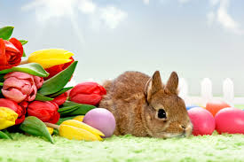 jeep easter bunny photo collection easter bunny desktop backgrounds
