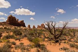 landscaping ideas for desert homes front yard landscape and
