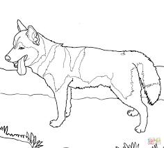 siberian husky dog super coloring dog patterns pinterest