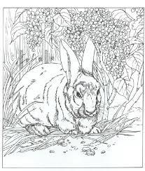 rabbit coloring pages coloringeast