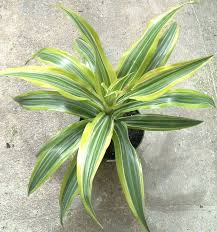 house plants names and pictures common house plants names 7778