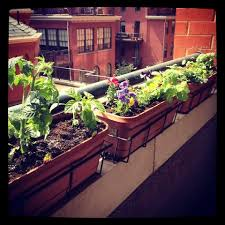 balcony herb garden ideas need to find these holders new house