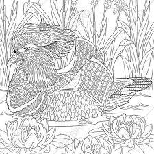 mandarin duck coloring book zentangle doodle coloring