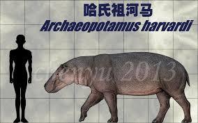 si e social hippopotamus 古河马 hippopotamus antiquus hippopotamus antiquus is the largest