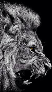 lion u0027s roar u2013 persevere