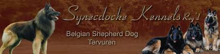 belgian sheepdog alberta synecdocke belgian shepherds