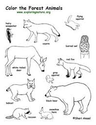 Animal Tracks Coloring Pages Forest Animals Coloring Page Forest Animals Coloring Pages