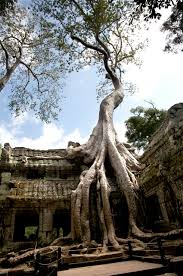 facts rarely known top 10 most amazing trees