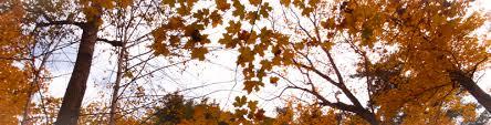 ontario tree atlas project the arboretum