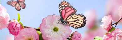 butterfly flower butterfly flower cover background twitrcovers