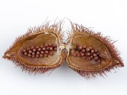 9 incredible benefits of annatto atsuete organic facts