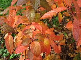 autumn color chickadee gardens