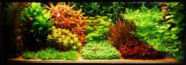 Aquascape Environmental Dutch Aquarium Aquascape A Style From The 1930s Aquascaping