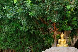 buddha statue the bodhi tree stock photo picture and