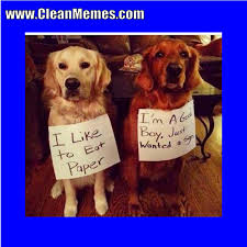 Clean Animal Memes - wanted a sign clean memes the best the most online