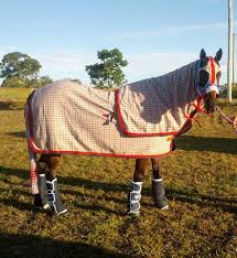 horse business directory horsi