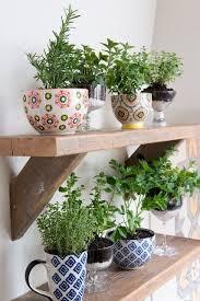 plantes cuisine une cuisine verdoyante cocon de décoration le