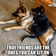 German Shepherd Memes - tuesday top ten best german shepherd memes doggies com dog blog