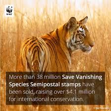 Home Interior Tiger Picture by World Wildlife Fund World Wildlife Twitter