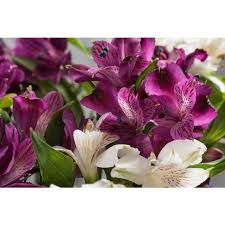 Alstroemeria Morrisons Morrisons Alstroemeria Bouquet Product Information