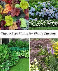 giardini rocciosi in ombra 10 best shade garden plants giardino piante e diserbante fai