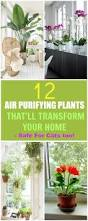 best 25 safe plants for cats ideas on pinterest cat safe plants