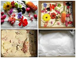 preserve flowers preserve flowers with borax tips for best results the