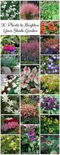 34 best gardening images on pinterest plants shade plants and