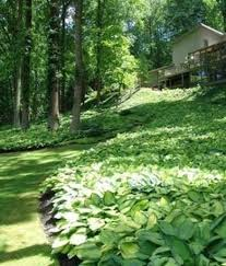 Backyard Ground Cover Options Best 25 Ground Covering Ideas On Pinterest Plant Covers Ground