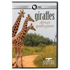amazon com nature giraffes africa u0027s gentle giants dvd n a